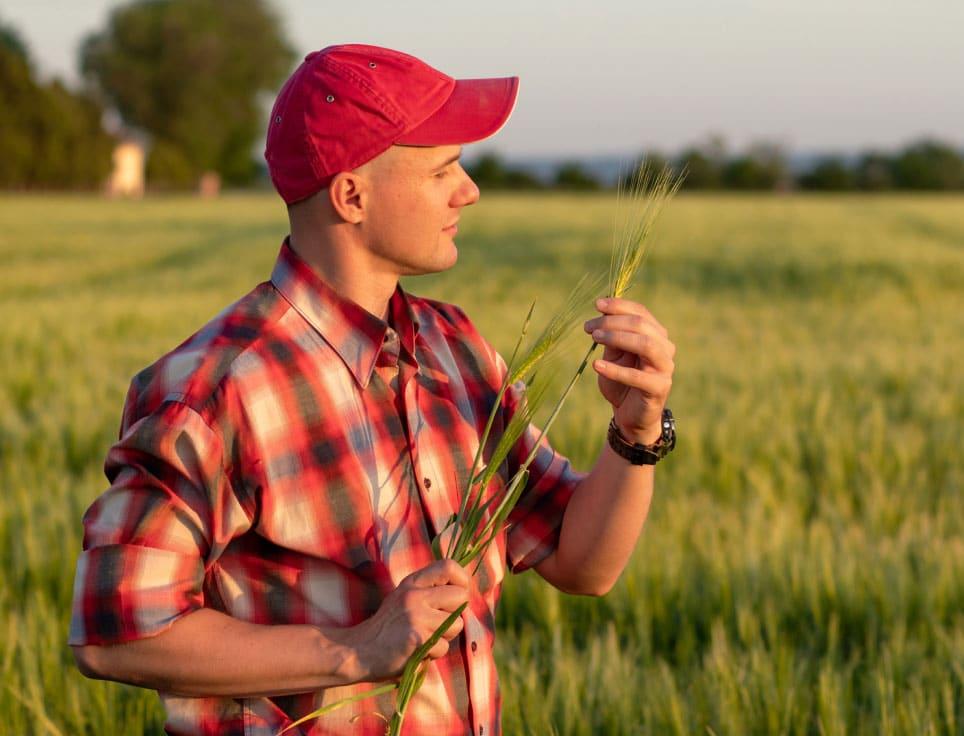 American Wagyu Farmer Cattle Raiser